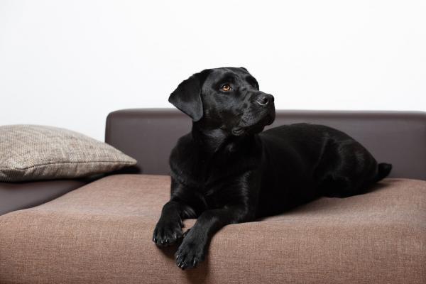 recht schnell. Black Bedroom Furniture Sets. Home Design Ideas