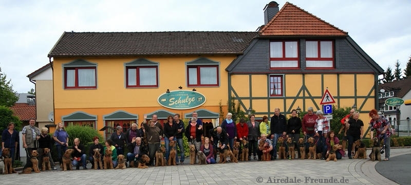 Airedale 6